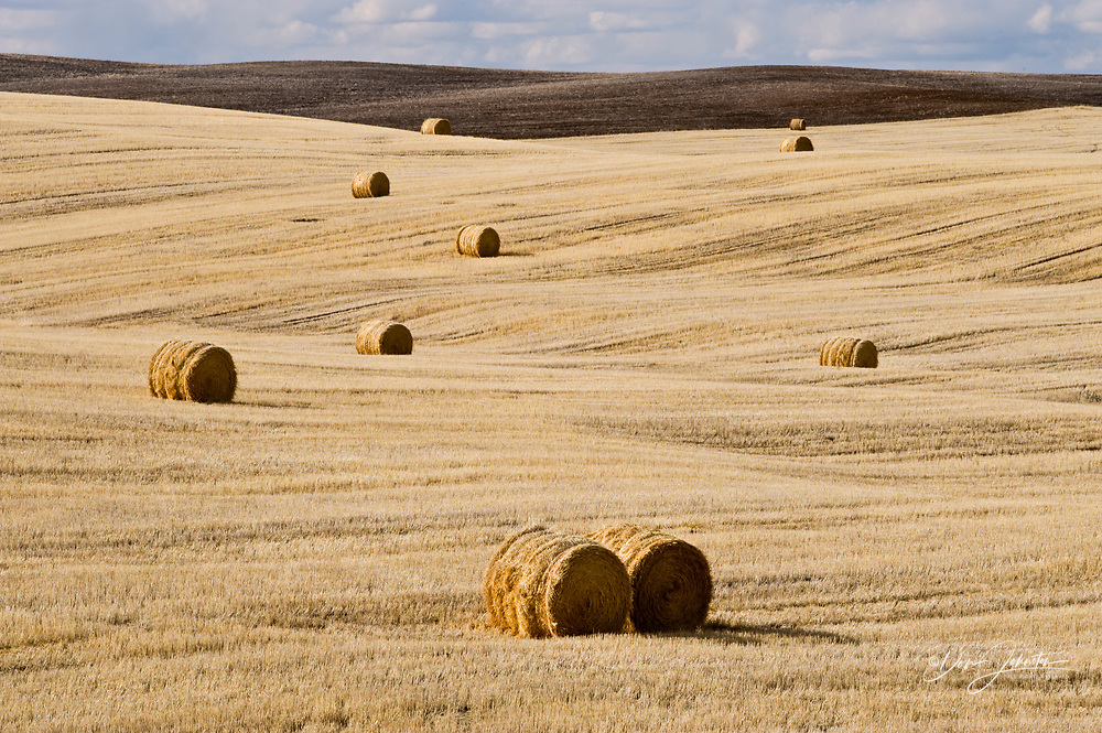 Hayrolls in prairie in late winter, near Mankota, Saskatchewan, Canada