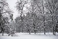 Bialystok, 26.01.2017. Po całodobowych obfitych opadach sniegu miasto zostalo przykryte 30 cm warstwa bialego puchu. Szczegolnie uroczo wygladaly miejskie parki N/z osniezone drzewa w Parku Zwierzynieckim fot Michal Kosc / AGENCJA WSCHOD