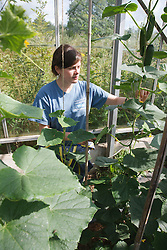 Trinity Organic Farm, Nottinghamshire - trainee gardener with cucumbers in polytunnel