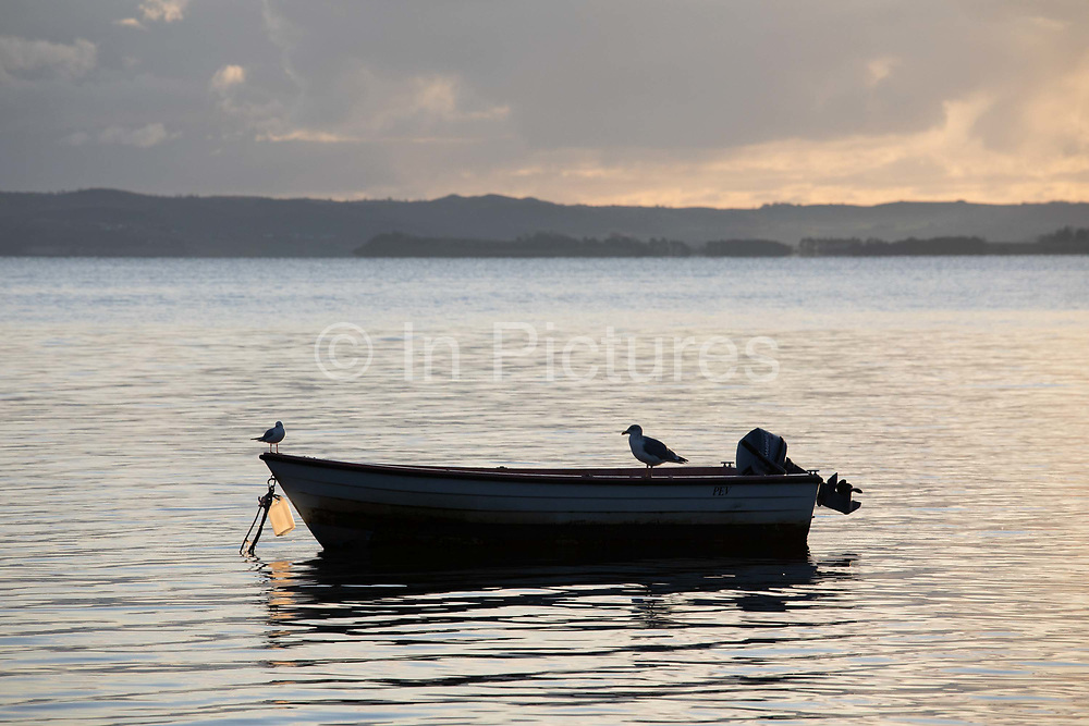 A couple of birds rest on a small anchored fishing boat early in the morning, Oct 29th 2019, Skæring,Århus, Denmark. The bay is much used by hobby fishermen, kayaks, rowers and sailors but it is autumn and the season is almost over.The beach is nearly deserted and is between Århus and the neaby coal power plant Studstrup.
