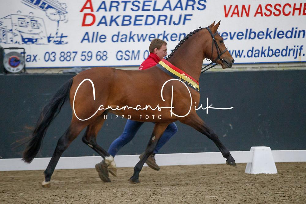 006, Ti Amo van Prinsenveld<br /> Hengstenkeuring Brp<br /> 3de phase - Hulsterlo - Meerdonk 2018<br /> © Hippo Foto - Dirk Caremans<br /> 16/03/2018