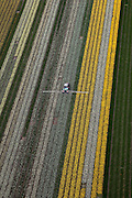 Nederland, Noord-Holland, Gemeente Anna Paulowna, 28-04-2010; bloembollenvelden in de Anna Paulowna Polder met voornamelijk narcissen. Een tractor besproeit de gewassen. Door de zandgrond is de polder in Kop van Noord-Holland (Noordkop) is een ware bollenstreek..Flower fields in the Anna Paulownapolder, with mostly daffodils. A tractor is spraying the plants. Because of the sandy soil the polder in the very north of North-Holland is a true flower bulb region. .luchtfoto (toeslag), aerial photo (additional fee required).foto/photo Siebe Swart