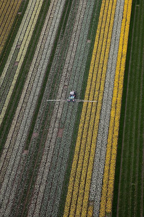 Nederland, Noord-Holland, Gemeente Anna Paulowna, 28-04-2010; bloembollenvelden in de Anna Paulowna Polder met voornamelijk narcissen. Een tractor besproeit de gewassen. Door de zandgrond is de polder in Kop van Noord-Holland (Noordkop) is een ware bollenstreek..Flower fields in the Anna Paulownapolder, with mostly daffodils. A tractor is spraying the plants. Because of the sandy soil the polder in the very north of North-Holland is a true flower bulb region. .luchtfoto (toeslag), aerial photo (additional fee required).foto/photo Siebe Swart