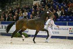 537 Tyson<br /> KWPN hengstenkeuring 2003<br /> Photo © Dirk Caremans