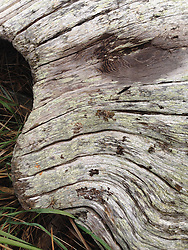 Driftwood Abstract, Tumbo Island, Gulf Islands National Park Reserve, British Columbia, Canada