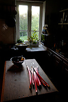 Rhubarbe sur une table de cuisine en bois dans une maison à la campagne / Rhubarb on a wooden kitchen table in a country house.