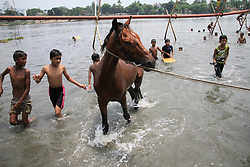 May 24, 2017 - Dhaka, Bangladesh - Boys are bathing a horse on the Buriganga River during the hot weather in Dhaka, Bangladesh, on May 24, 2017. (Credit Image: © Rehman Asad/NurPhoto via ZUMA Press)