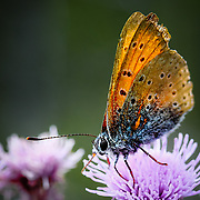 orange and blue buterfly