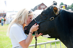 © Licensed to London News Pictures. 22/07/2014. Llanelwedd, UK. Lucy Jones 21 farmer from Newport, Gwent waits in the cattle ring to show her father's Holstein cow Sara. A record numbers of visitors in excess of 240,000 are expected this week over the four day period of Europe's largest agricultural show. Livestock classes and special awards have attracted 8,000 plus entries, 670 more than last year. The first ever Royal Welsh Show was at Aberystwyth in 1904 and attracted 442 livestock entries. Photo credit: Graham M. Lawrence/LNP