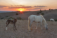 PLACITAS WILD HORSES: MARE WITH FILLY