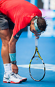 Rafael Nadal stands and examines a broken shoelace after it broke in mid play causing him to fall onto the court. Nadal (ESP) turned back a strong challenge by K. Nishikori (JPN) in the men's singles division in day eight of the Australian Open. Nadal struggled at times and required a medical time out to tape his hands but he ended the day winning 7-6 (3), 7-5, 7-6 (3). The match was held at Melbourne's Rod Laver Arena.