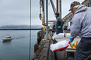 SAN FRANCISCO, CA - OCTOBER 27: Water2Table owner Joe Conte looks for his next delivery of fresh fish as fisherman Mike Esquivel reloads ice for his boat, at Water2Table Fish Company in San Francisco, California, U.S. on Wednesday April 08, 2020. Conte initially had to layoff his entire staff at the onset of the COVID-19 shutdown after losing all his restaurant contracts, though quickly pivoted to a consumer-based business model and was able to re-hire nearly everyone within a week. Photographer: Philip Pacheco/Bloomberg