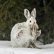 Rabbits and Squirrels