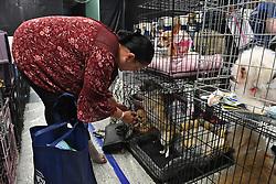 Martha Ferrer drops off her two Chihuahuas at the West Boynton Park and Recreation Center in Boynton Beach, FL, USA., in preparation for Hurricane Irma on Saturday, September 9, 2017. Photo by Jim Rassol/Sun Sentinel/TNS/ABACAPRESS.COM