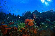 West Wall Ecosystem Orange Canyon Grand Cayman