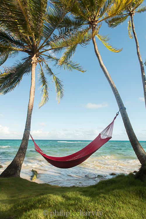 Hammock between palm trees on Little Corn Island, Nicaragua