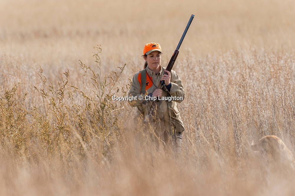 upland, bird, hunting, stock, photo, photography, image,