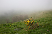 Foggy weather scarp slope of chalk downs near Knap Hill, Alton Barnes, Wiltshire, England, UK