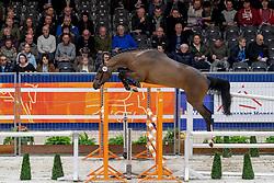 141, Hilburry Z<br /> KWPN hengstenkeuring - 's Hertogenbosch 2020<br /> © Hippo Foto - Dirk Caremans<br />  29/01/2020
