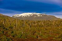 Near Klawock, Prince of Wales Island, Southeast Alaska USA