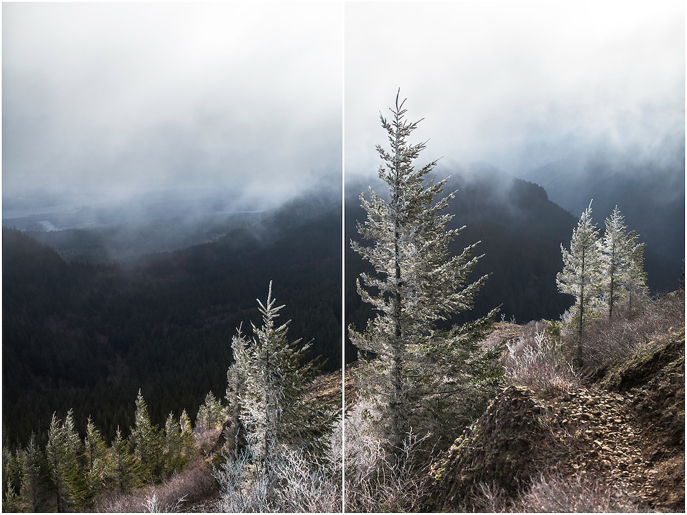 Along the way to the top of Table Mountain, clouds obscure the view of the hills across the valley, the same clouds deposit hoar frost onto windswept branches.