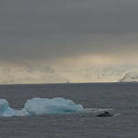 A Fin Whale swims past an iceberg near the Antarctica Circle, Antarctica.