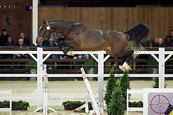 073, Cristo KC De Beau Marais<br /> BWP Hengsten keuring Koningshooikt 2015<br /> © Hippo Foto - Dirk Caremans<br /> 23/01/16