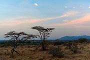 Samburu National Reserve early one morning in July.
