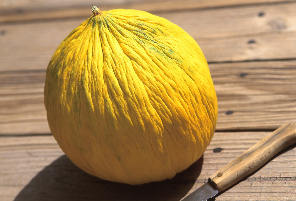 Close up photo of a Casaba melon and a knife sitting on a rustic wood deck