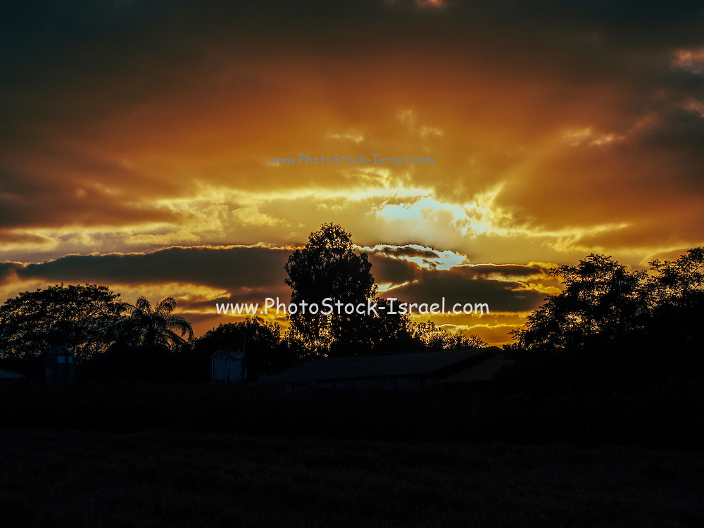 Orange sunset over silhouetted trees