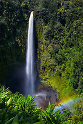 Located 12 miles north of Hilo and just above the sleepy town of Honomu, 'Akaka Falls is the breathtaking reward for a short but mildly arduous hike through a lush, tropical rainforest.  Free-falling 442 feet, the Kolekole Stream creates a spectacular scene against the sheer vertical walls of its gorge, ending in a misty explosion in the pool below.  The early morning sunlight adds a touch of color and texture, casting deep shadows and a faint double rainbow.