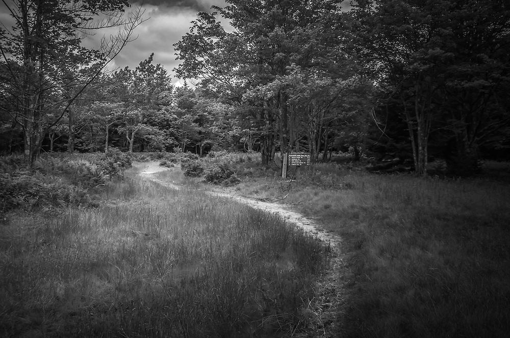 Dolly Sods Trail Head