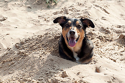 OK so you recon there is this place called the Valley of the kings and they have a thing called the Sphinx looks a bit like a dog buried in the sand<br /> <br /> May 18 2014<br /> Image © Paul David Drabble <br /> www.pauldaviddrabble.co.uk