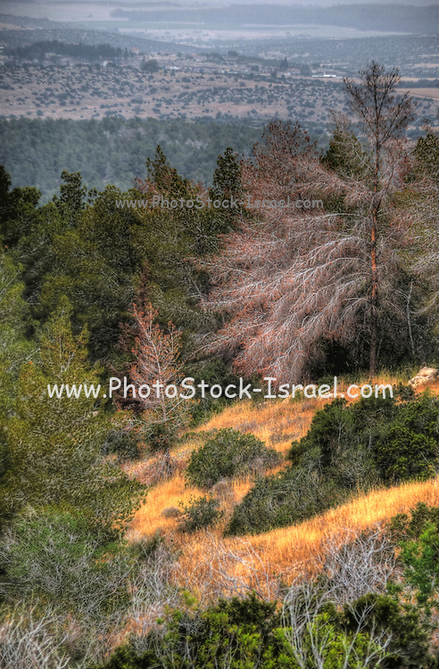 Israel, Lachish Region, forest landscape