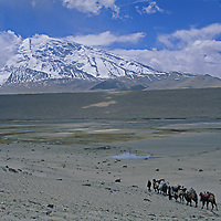 Kyrgiz nomads lead  Bactrian camels carrying equipment for trekkers in the Pamir Mountains of Xinjiang, China.  7546m Mustagh Ata rises in the background.