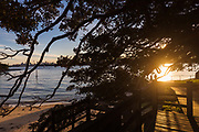 Sydney, Australia. Thursday 6th August 2020. Camp Cove beach during the golden hour overlooking a moreton bay fig tree.