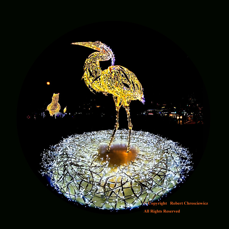 Stanley the Heron: Stanley the Blue Heron takes a regal stance during Lumiere, Vancouver British Columbia Canada.