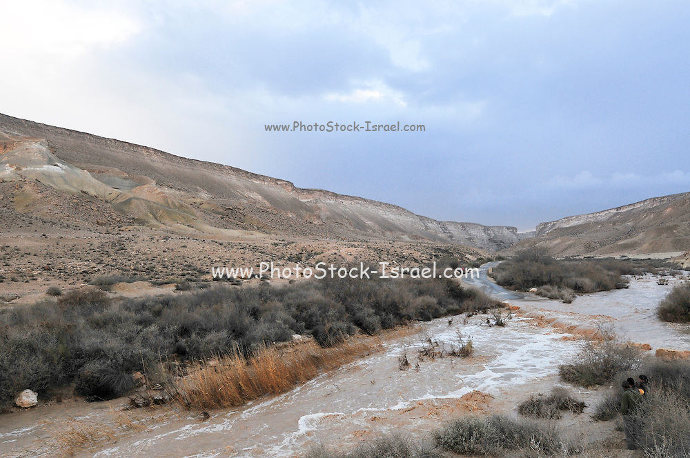 Israel, Negev, Flash flood in the Tzin desert river.