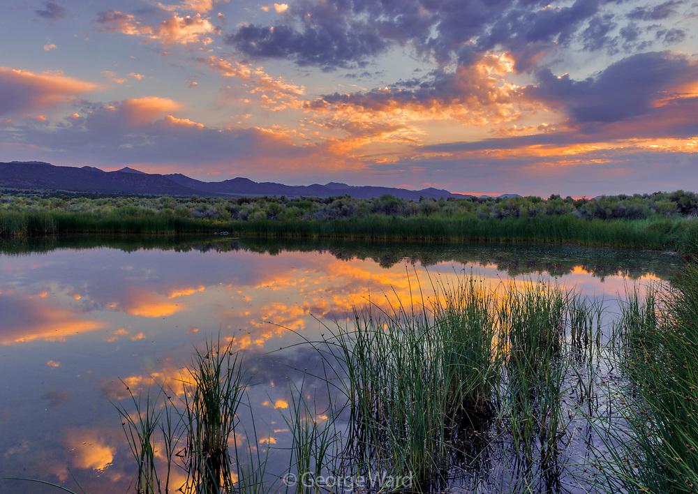 Dechambeau Ponds at Dawn, Mono Basin National Forest Scenic Area, California