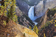 The Lower Falls of the Yellowstone River and the Grand Canyon of the Yellowstone, Yellowstone National Park, Wyoming, USA