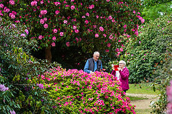 © Licensed to London News Pictures. 28/05/2021. IVER, UK.  People view the rhododendrons and azalea, currently in bloom, in the Temple Gardens at Langley Park in Iver, Buckinghamshire ahead of the Bank Holiday weekend, when temperatures are expected to rise above 20C.  Langley Park is a former royal hunting ground with links back to King Henry VIII, Queen Elizabeth I and Queen Victoria. Photo credit: Stephen Chung/LNP