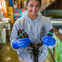 """Ashley Conrad, crew on the """"Hunter James"""" sorting lobster at Potts Harbor Lobster in Harpswell, Maine."""