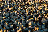 South African Seabird Islands