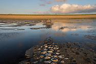 Strekdam in Waddenzee bij Westhoek