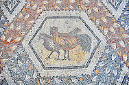 3rd century AD Roman mosaic panel of  two chickens  from Thugga, Tunisia.  The Bardo Museum, Tunis, Tunisia. .<br /> <br /> If you prefer to buy from our ALAMY PHOTO LIBRARY  Collection visit : https://www.alamy.com/portfolio/paul-williams-funkystock/roman-mosaic.html - Type -   Bardo    - into the LOWER SEARCH WITHIN GALLERY box. Refine search by adding background colour, place, museum etc<br /> <br /> Visit our ROMAN MOSAIC PHOTO COLLECTIONS for more photos to download  as wall art prints https://funkystock.photoshelter.com/gallery-collection/Roman-Mosaics-Art-Pictures-Images/C0000LcfNel7FpLI