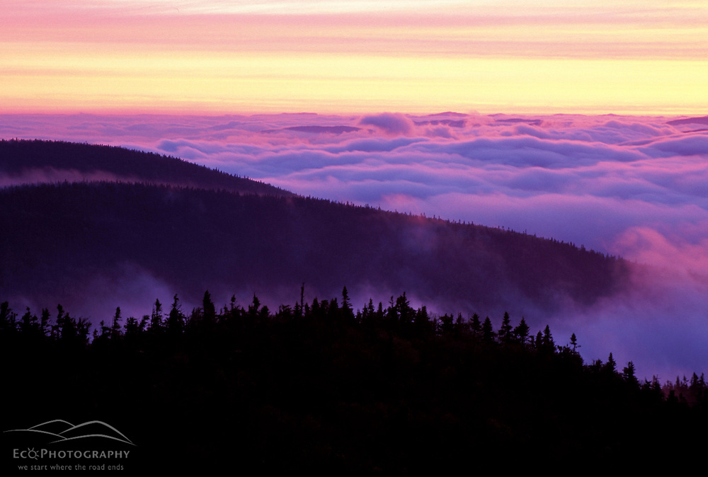 From Sugarloaf Mtn. Sunrise, undercast, fog. Nash Stream State Forest.   Northern Forest.  Stratford, NH