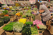 © Licensed to London News Pictures. 15/03/2012. London, UK. Natalie Wells looks for flowers for her hotel contract business. The Mothering Sunday sales rush is on for flower growers, suppliers, florists and retailers amongst the Flowers at the New Covent Garden Flower Market on March 15th 2012 in London, England. New Covent Garden Flower Market is London's premier wholesale market stocking the widest range of flowers, plants and foliage in the UK. The run up to Mothers' Day is crucial in the flower selling calendar as Mothers' Day sales are condensed into about four days making the market very busy. Traditionally, Mothering Sunday was a day when children, mainly daughters, who had gone to work as domestic servants, were given a day off to visit their mother and family. Today, Mother's Day is a time when children give flowers and cards to their mothers, and generally pamper them..  Photo credit : Stephen SImpson/LNP