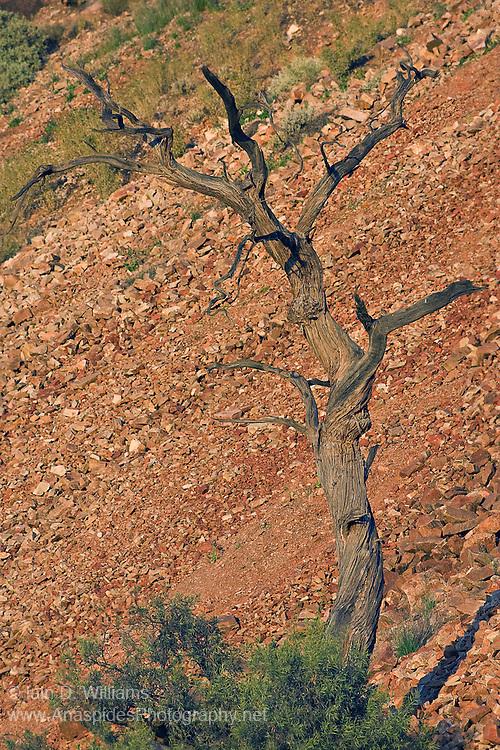 Red Talus Slope, Flinders Ranges National Park - South Australia