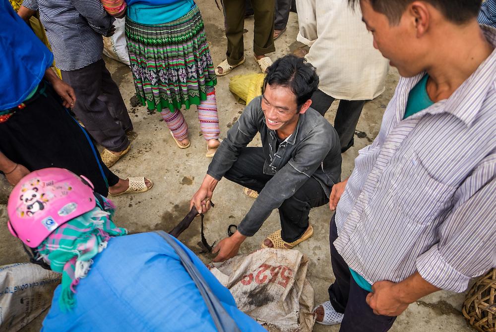 BAC HA, VIETNAM - CIRCA SEPTEMBER 2014:  Merchant pulling a pig at the Bac Ha sunday market, the biggest minority people market in Northern Vietnam