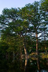 Stock photo of large cypress trees along the banks of the Frio River in the Texas Hill Country